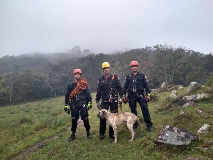 Tigre, assim como é chamado, foi resgatado por uma equipe de bombeiros de Santa Cruz do Sul. Foto: Corpo de Bombeiros / Divulgação