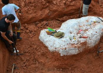 Fósseis foram escavados de rochas triássicas. Foto: CAPPAUFSM/Divulgação