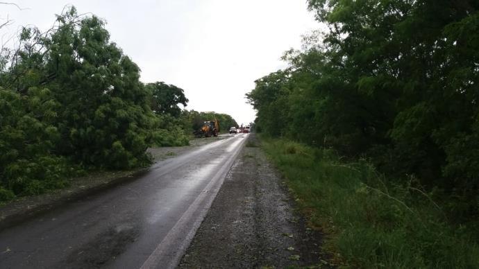 Diversas árvores e postes de energia elétrica caíram entre os km 416 e 420. Foto:  Divulgação/PRF