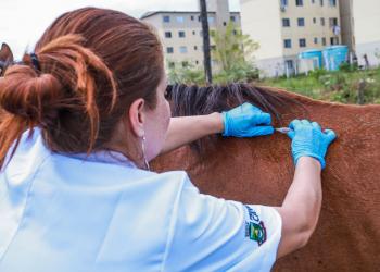 Operação percorreu o bairro Niterói para avaliar a situação da saúde de cavalos utilizados para puxar carroças. Foto: Derli Colombo/Divulgação