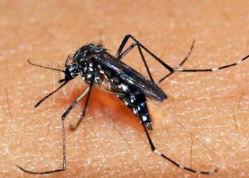 Verão é a época do ano mais propícia para a circulação do Aedes aegypti. Foto: Arquivo Palácio Piratini