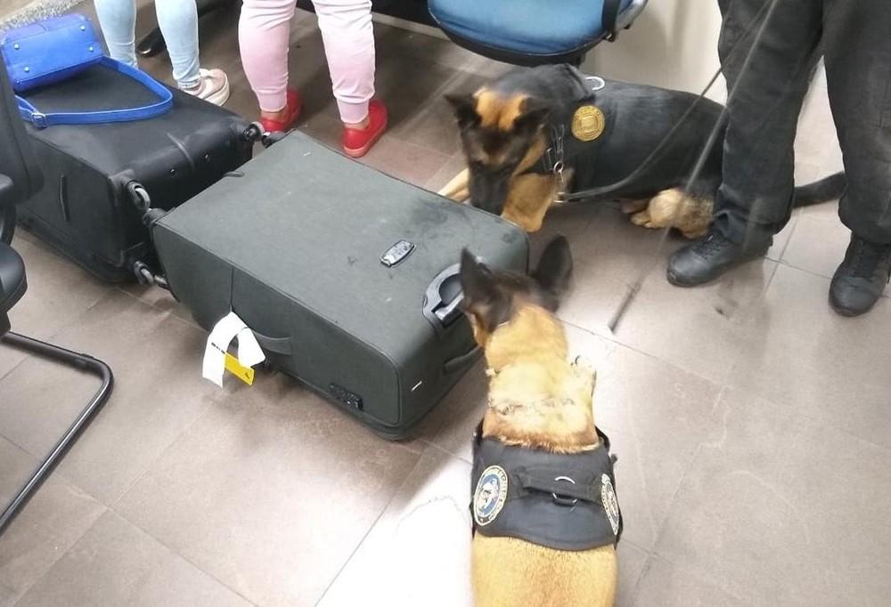 A droga foi detectada pelos cães farejadores da Polícia Federal. Foto: Divulgação