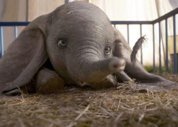 Dumbo será exibido para crianças com autismo acompanhadas de um adulto. Foto: Divulgação