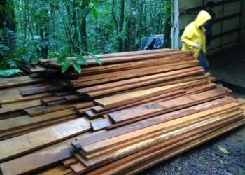 As madeiras, de espécies nativas de Mata Atlântica, serão utilizadas em reserva indígena de Maquiné. Foto: Divulgação / Sema