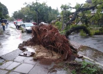 Uma das quedas de árvores ocorreu na rua Marquês do Alegrete, no bairro São João.