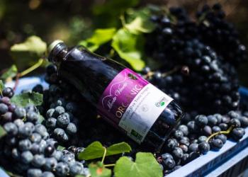 Wine South America. Garrafa do suco premiado em meio a uvas.