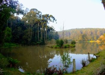 Imagem da Floresta Nacional de Canela. Foto: Rosana Klafke/Sem Roteiro/Agora no RS
