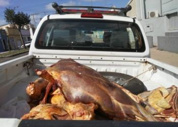 A carne apreendida será destinada ao zoológico de Sapucaia do Sul. Foto: Policia Civil/Divulgação