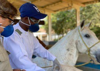 O soro é produzido em cavalos. Foto: Divulgação/Instituto Vital Brazil