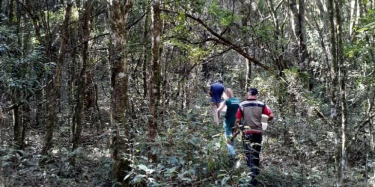 Neste ano, 30 bugios foram encontrados mortos em Caxias do Sul. Foto: Divulgação/Vigilância Ambiental em Saúde