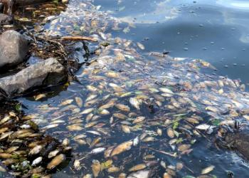 Peixes apareceram mortos no Rio Toropi, em São Martinho da Serra. Foto: Divulgação/ 2º BABM de Santa Maria