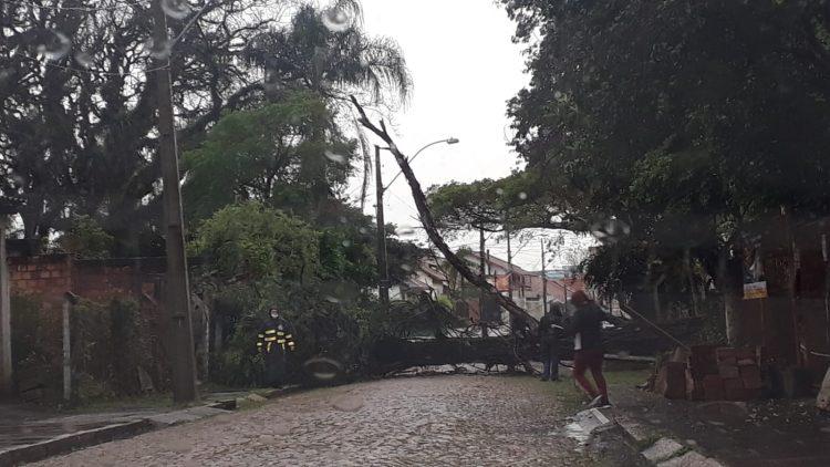 Queda de árvore na zona norte de Porto Alegre. Foto: EPTC / Divulgação